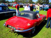 jaguar17t.jpg