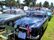 jaguar50t.jpg